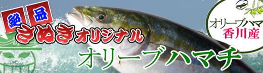 香川県 お歳暮/ギフトのオリーブハマチの通販/販売店・お取りせ